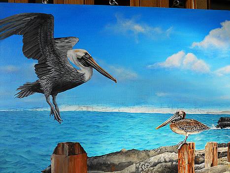 WIP- Pelican 04 by Cindy D Chinn