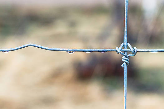 James BO Insogna - Wire Fence