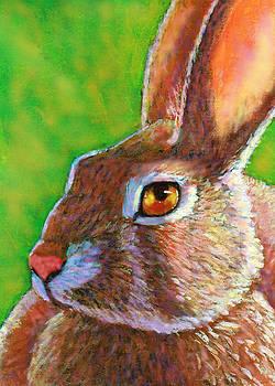 Wise Bunny by Rachel Armington
