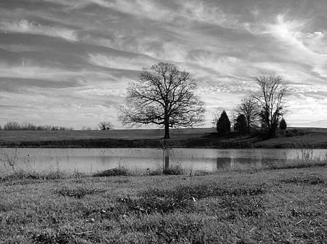 Wise Oak by Dawn Davis