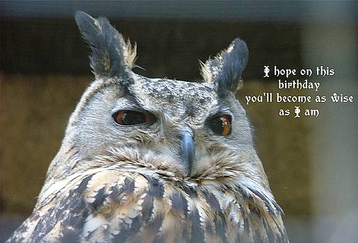 Wise Owl by Fun Cards