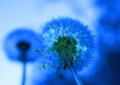 Valerie Fuqua - Wish Away the Blues