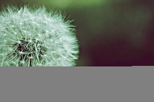 Wish by Keli Gramse