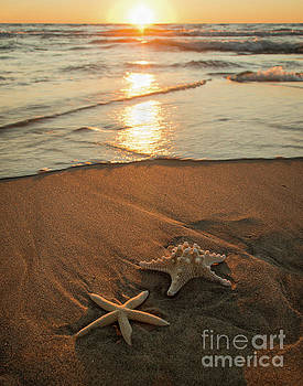 Wish Upon a Starfish by OiLin Jaeger