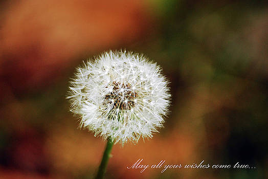 Wishes by Lori Tambakis