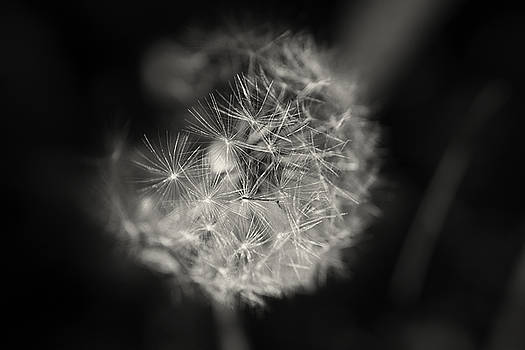 Wishes by Sarah Boyd