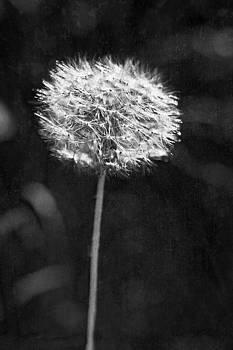 Valerie Fuqua - Wishful Thinking in Black and White