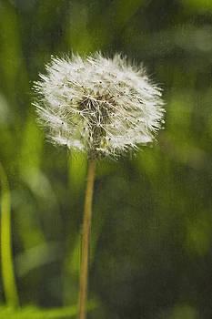 Valerie Fuqua - Wishful Thinking