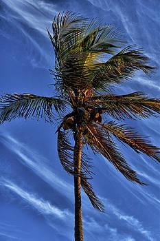 Wispy Clouds and Windblown Palms by Maria Keady
