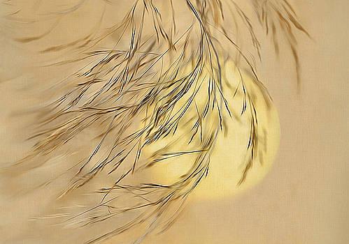 Wispy Sunset-2 by Nina Bradica