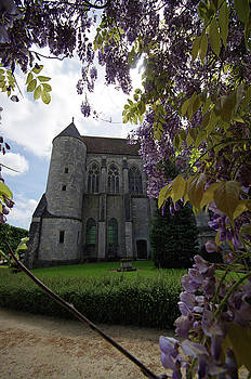 Wisteria at Chartres by Sarah Lamoureux