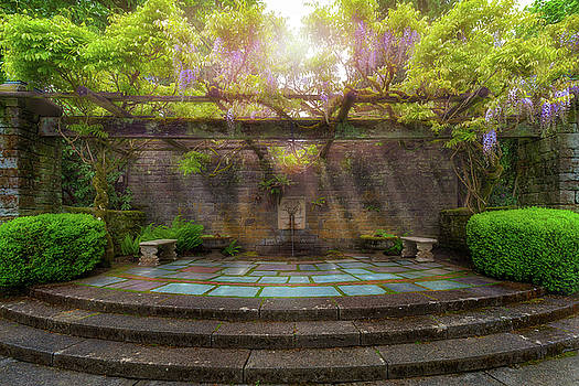 Wisteria Blooming on Trellis at Garden Patio by David Gn