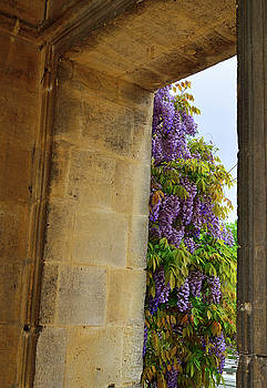Wisteria Door by Kathy Yates