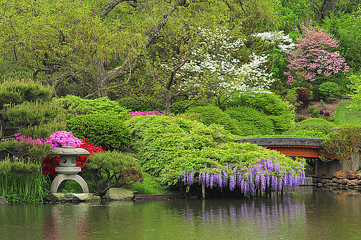 Wisteria In a Japanese Garden by Greg Matchick