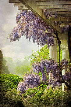 Wisteria in a Spring Shower Two by Susan Isakson