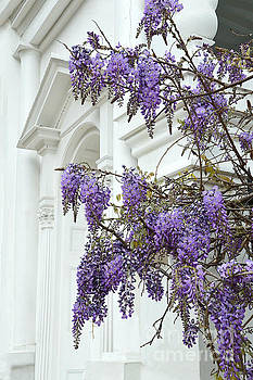 Wisteria in Charleston by Catherine Sherman