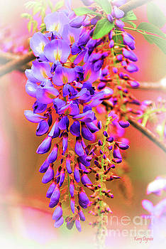 Wisteria in Color  by Karry Degruise