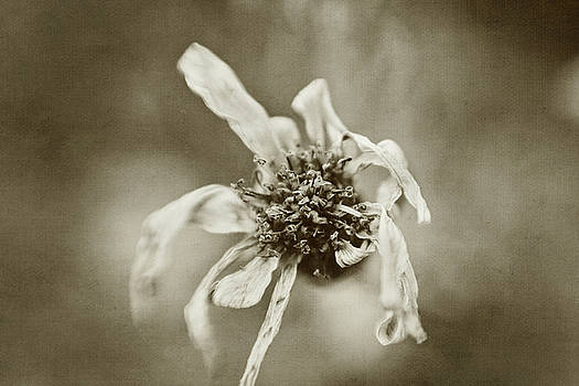 Scott Pellegrin - Withered Beauty