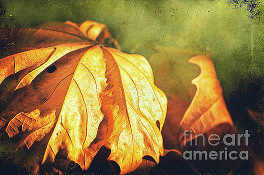 Withered leaves by Silvia Ganora