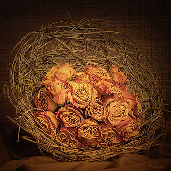 Withered Roses by Wim Lanclus