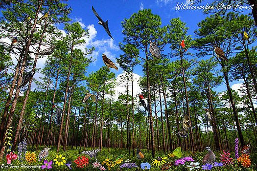 Barbara Bowen - Withlacoochee State Forest Nature Collage