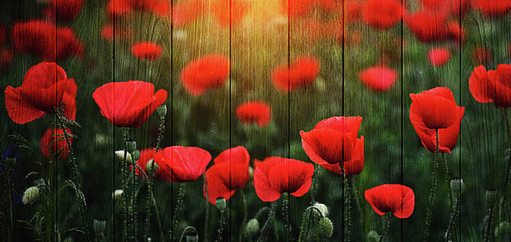 Wodd Poppies by Bess Hamiti