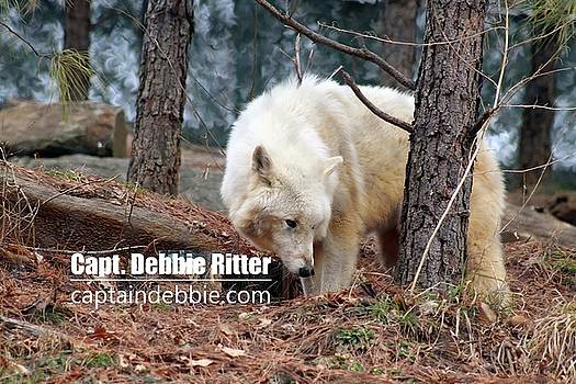 Wolf 5803 by Captain Debbie Ritter