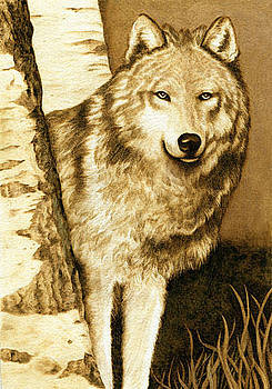 Wolf Amongst The Birches by Cate McCauley