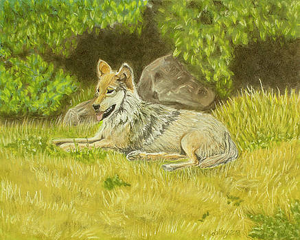 Wolf at Rest by Dorothy Riley