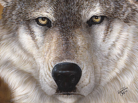 Wolf Closeup by Wayne Pruse