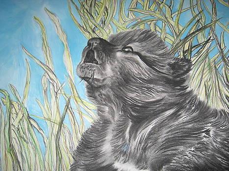 Wolf Cub by Theodora Dimitrijevic