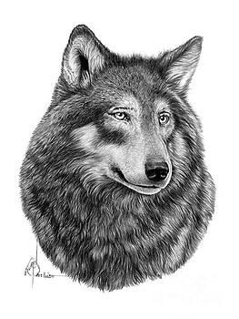 Wolf drawing by Murphy Elliott