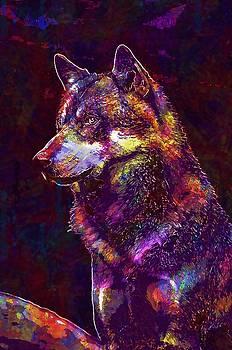 Wolf Face Fur Close Wild Animal  by PixBreak Art
