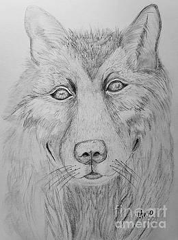 Maria Urso - Wolf in My Dreams