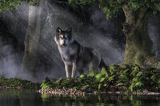 Wolf in the Forest by Daniel Eskridge