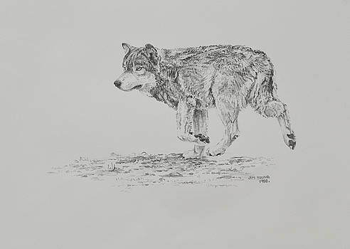 Wolf by Jim Young