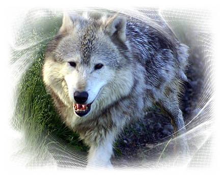 Marty Koch - Wolf