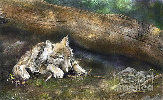 Wolf Pup by Barb Kirpluk