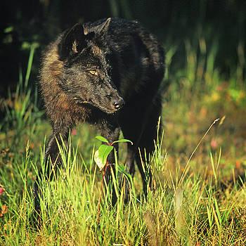 Scott Wheeler - The Eye of the Wolf