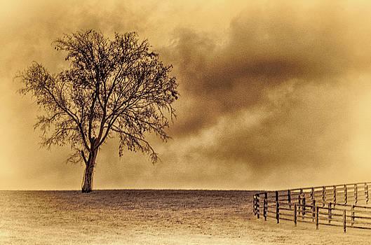 Wolf Tree by Winnie Chrzanowski