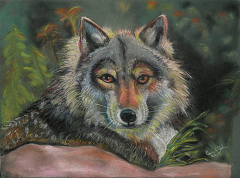 Wolf Watching by Carol Jobe
