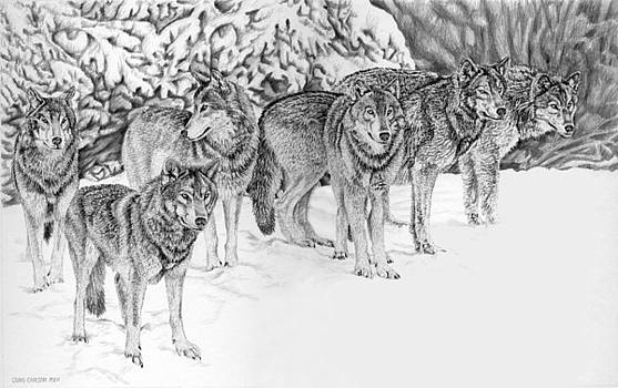 Wolfpack by Craig Carlson