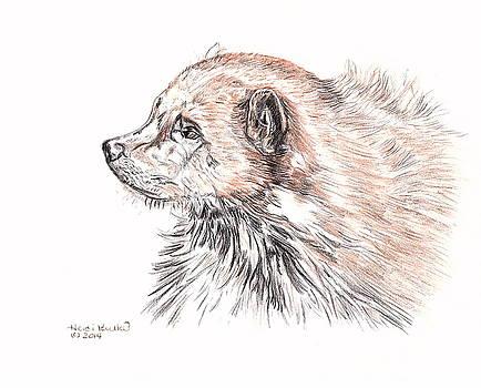 Wolverine by Heidi Kunkel