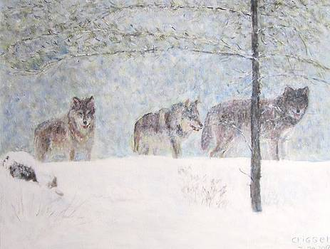 Wolves of the Wilderness by Glenda Crigger