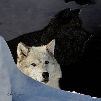Kae Cheatham - Wolves, Real and Surreal