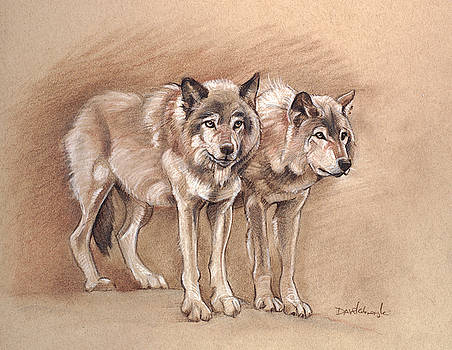 Wolves - Wildlife Drawing by Dave Kobrenski