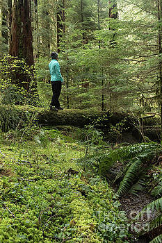 Woman on a Moss Covered Log in Olympic National Park by Brandon Alms