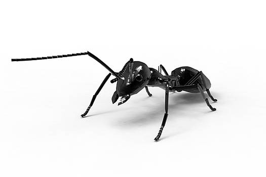 Wonder Ant by Creatives Think