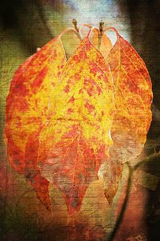 Angela Doelling AD DESIGN Photo and PhotoArt - Wonderful autumn