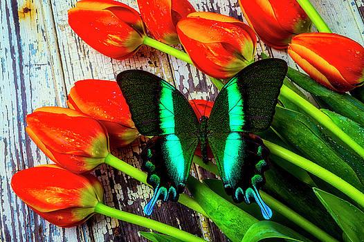 Wonderful Beautiful Butterfly by Garry Gay